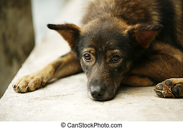 The sad puppy - Brown color puppy with sad eyes looks
