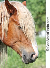 Palomino horse head close up - Palomino horse with long mane...