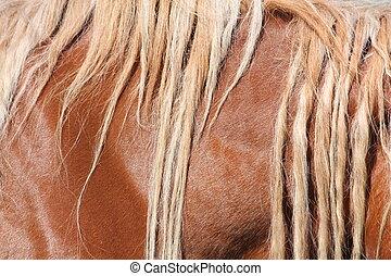 Palomino horse mane close up - Palomino horse long light...