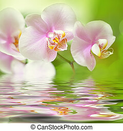 beautiful pink orchid flower background reflected in water