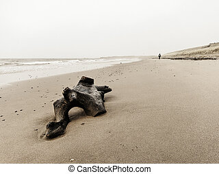 Driftwood on the beach - Driftwood and a single woman...