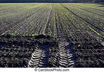 Winter crop on a field.