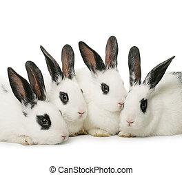 four rabbits - close up portrait of four cute rabbits