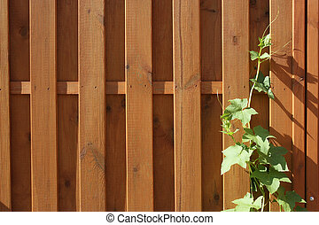 The new wooden fence and  the twined ivy
