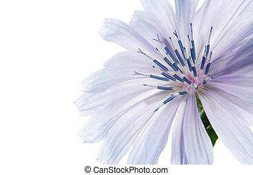 azul, flor