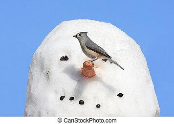 Bird On A Snowman - Tufted Titmouse baeolophus bicolor on a...