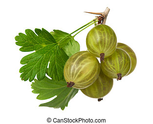 Ripe gooseberries - Ripe fresh gooseberries on a branch...