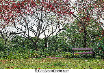 Bench in park with red flower tree