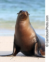 Sea Lion Stares - A Sea Lion poses for the tourists on the...