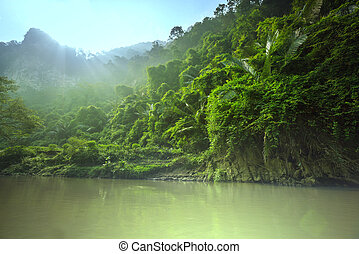 Jungle - jungle in Vietnam