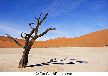 Amazing dead trees in beautiful desert