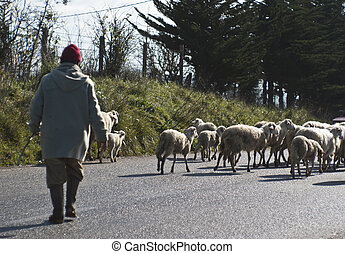 Shepherd with his sheeps on rural road