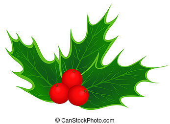traditional Christmas holly leaves and berries