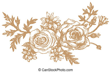 Roses.Hand-drawn illustrations - Roses. Hand-drawn...