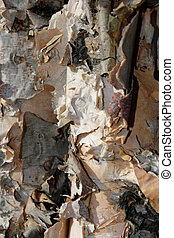 Frilly Birch Bark #2 - Frilly birch bark creates an...