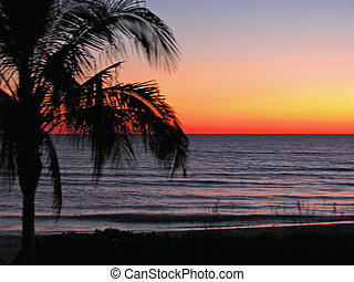 tropical sunset - sunset over the ocean, tropical palms...