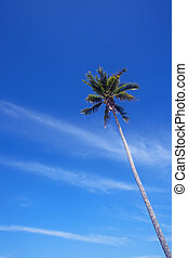 Coconut and blue sky