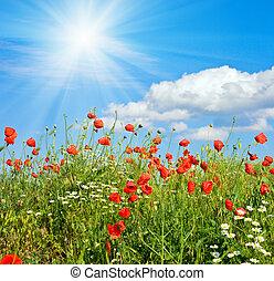 美麗, 罌粟, 夏天, 林間空地, 陽光