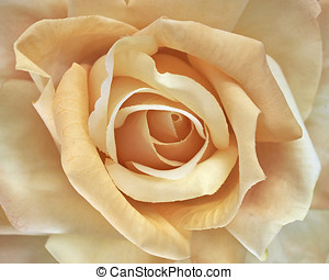 artficial rose, floral background