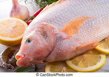 frescor, reddens, nile, Tilapia, peixe, (Oreochromis,...