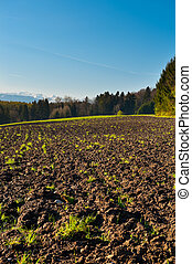 Plowed Fields and Forest in Switzerland