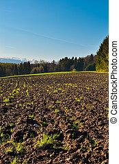 Plowed Fields -  Plowed Fields and Forest in Switzerland