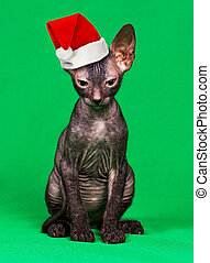 Kitten in a Christmas hat on a green background
