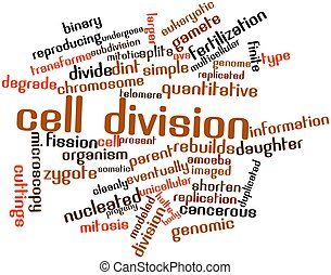 Cell division - Abstract word cloud for Cell division with...
