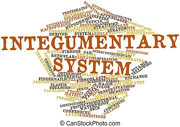 Word cloud for Integumentary system - Abstract word cloud...