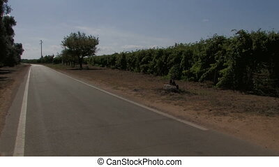 Country road and grape vines