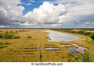 heathland view - High angle view from a watch tower over the...