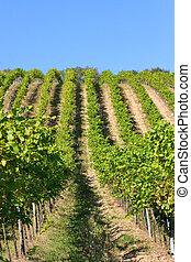 Herbstlicher Weinberg, Wien, sterreich - Wine yard in autumn...