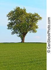 藍色, 草地, 樹, 天空, 單個, 綠色, 以前