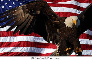 Bald Eagle American flag - Bald Eagle with an American Flag...