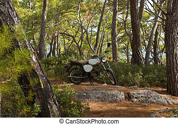 Motor bike in pine forest - Motor bike parked in the middle...