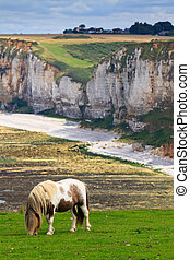 Horse on cliffs near Etretat and Fecamp, Normandy, France