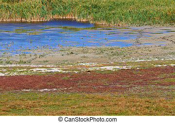 Reed Belt Landscape in National Park (Lake Neusiedl /...