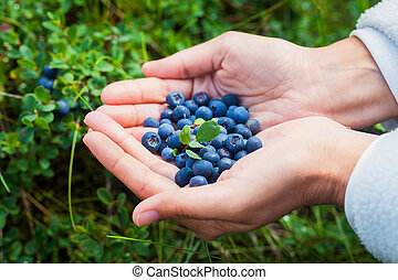 Woman holding fresh blueberries - Woman holding in hands...
