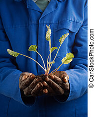 African American Farmer with New Plant - African American...