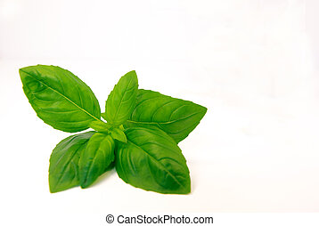 Fresh basil - Close-up view of fresh basil over a white...