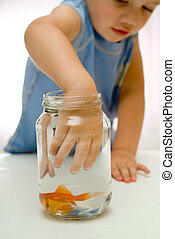 Boy toddler hand in fish bowl - Toddler boy with hand in...