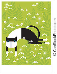 Black and white cat - A black and white cat is resting in...