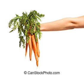 Bunch of Carrots with Leaves on a White Background