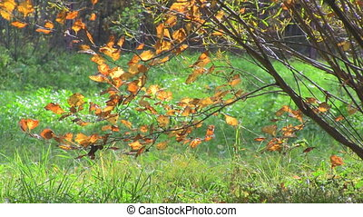 Autumn leaves on the nature background