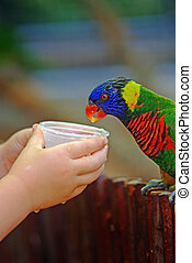 Feeding parrot - Child hands feed colorful tame pet parrot