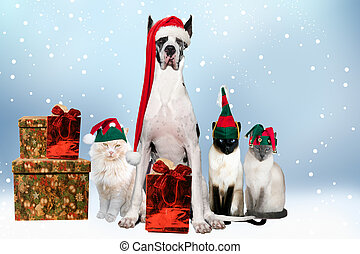 House pets agorned with Xmas hats and gifts
