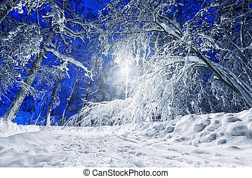 Winter road with streetlight at night - Winter road lit with...