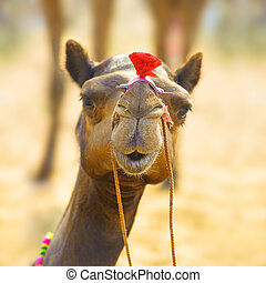 Camel animal adventure background