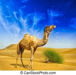 Desert landscape. Sand, camel and blue sky with clouds. Travel adventure background.
