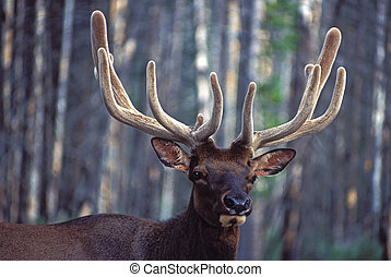 Elk Portrait - When you venture down the slow road, as in...